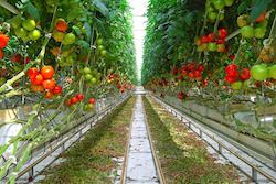 L'agriculture  s'installe en ville - Facilities, site du Facility management